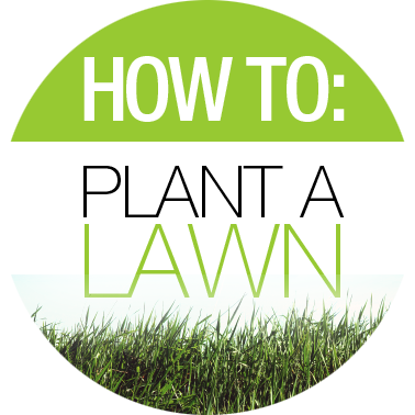 How to Plant a Lawn